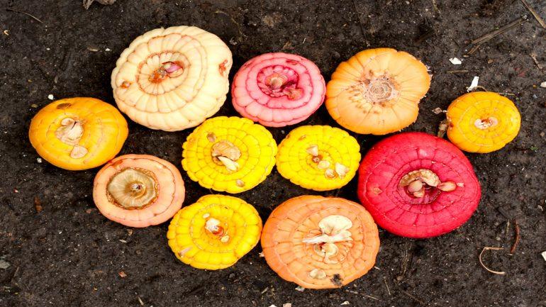 Цветы гладиолусы - в какое время выкапывать луковицы
