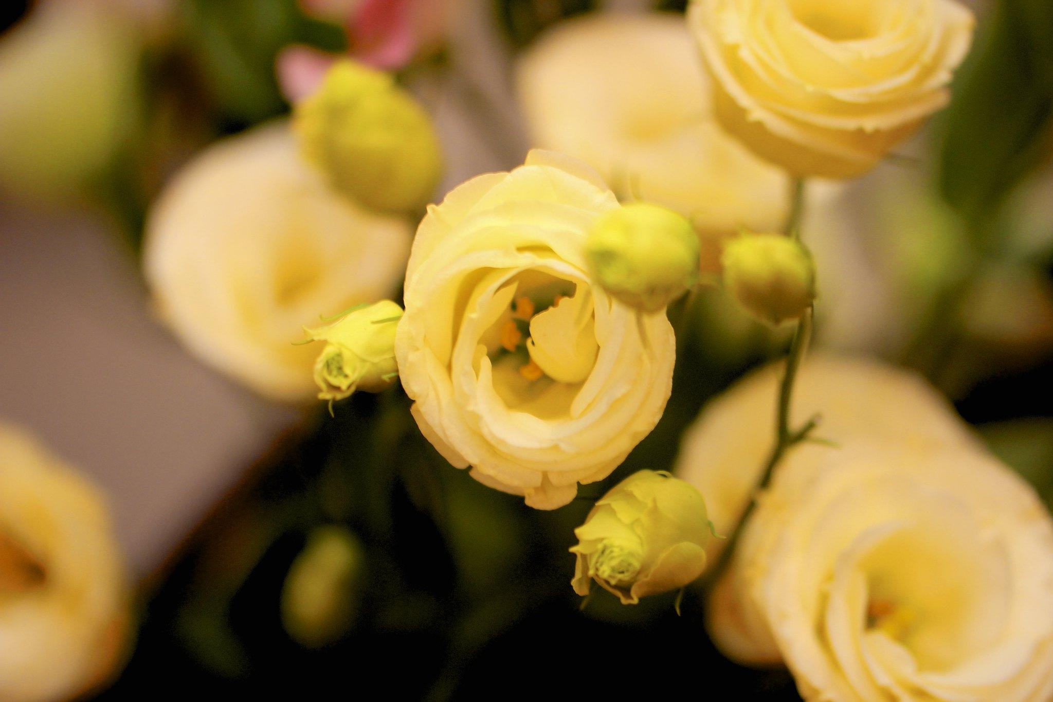 Цветок эустома
