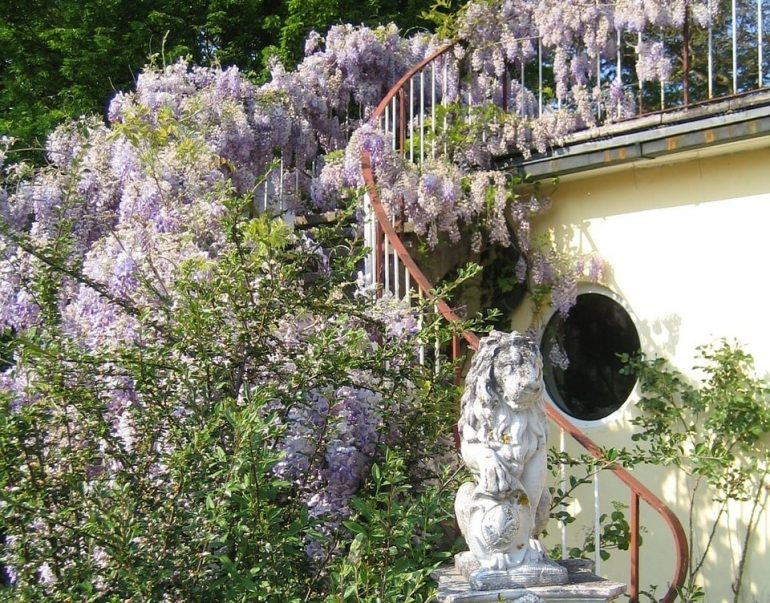 Цветок клематис в ландшафтном дизайне