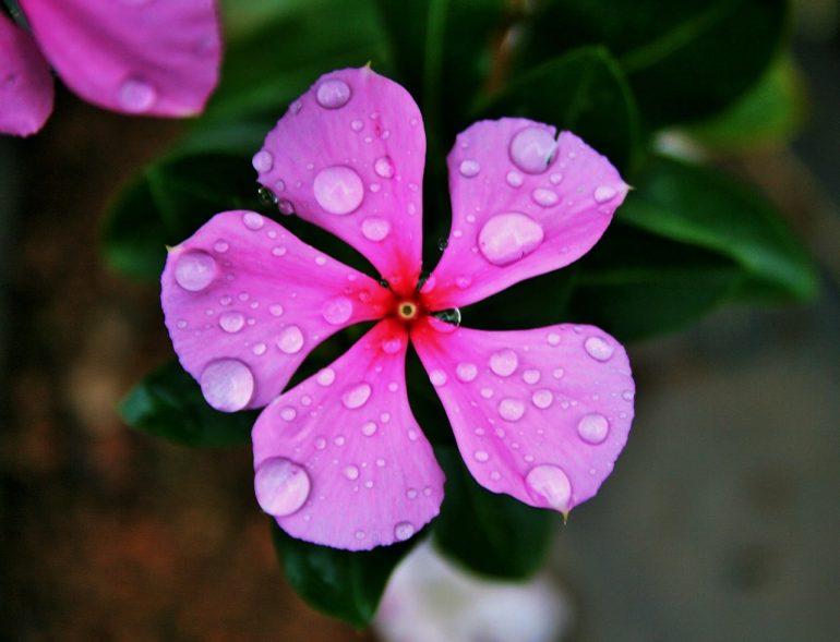 Разновидности цветка
