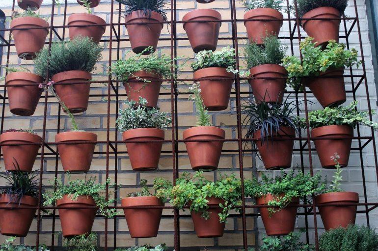 Сад на стене