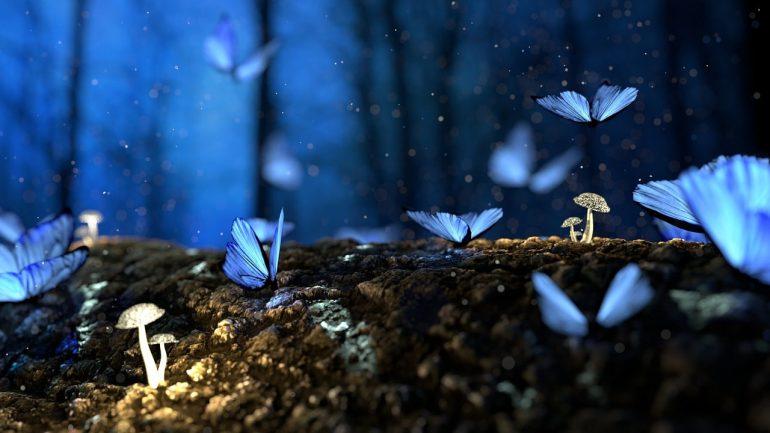 Количество бабочек во сне