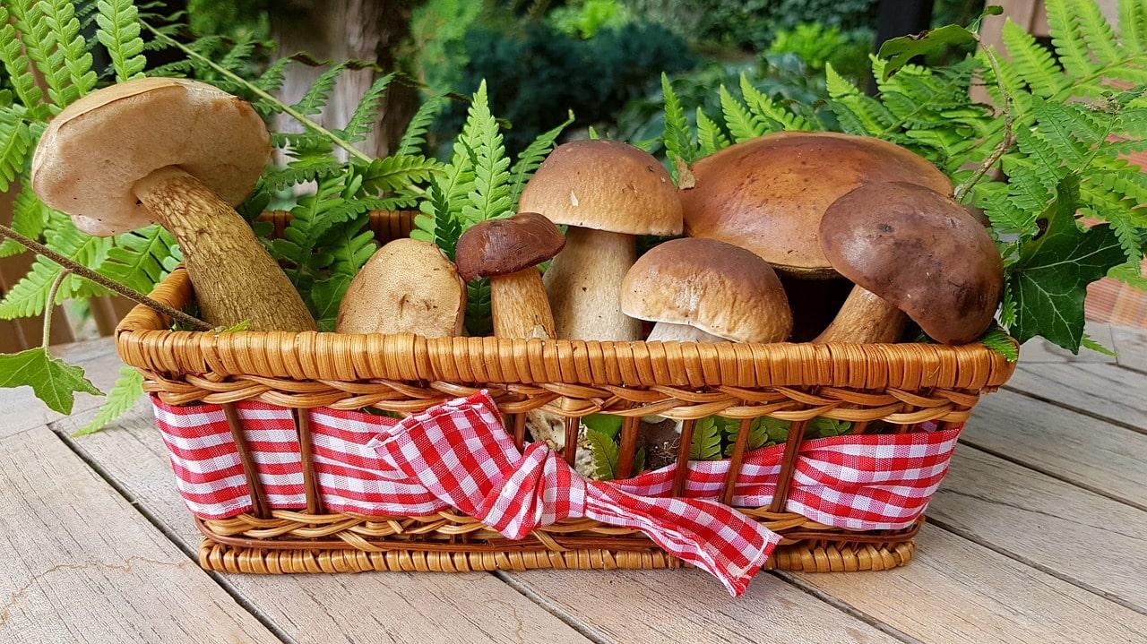 Чем полезны грибы
