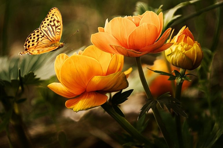 Бабочка во сне