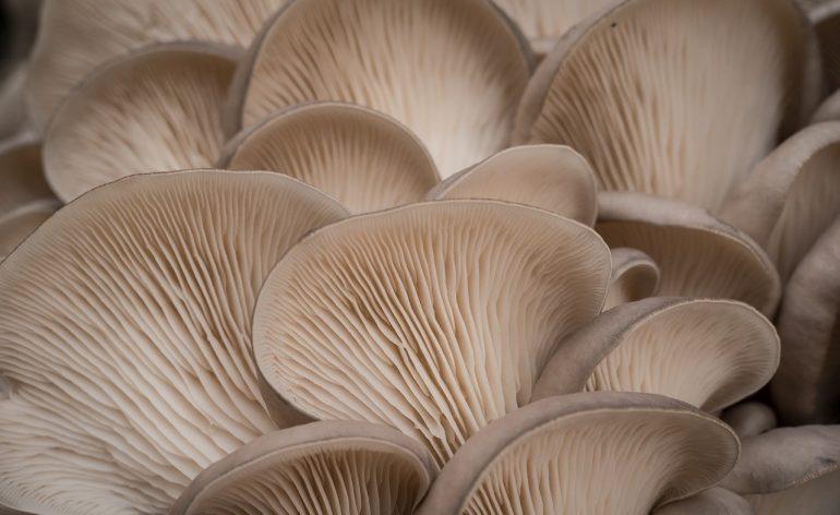 Искусственно выращенные грибы