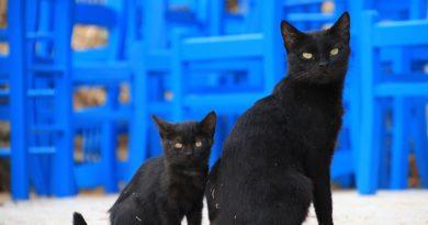 Приметы о черных кошках