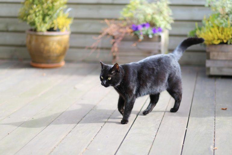 Черный кот перешел дорогу