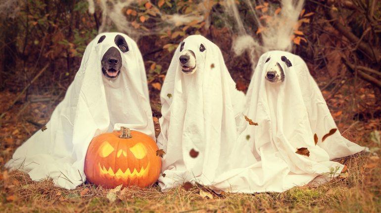 Привидения к Хэллоуину