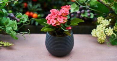 Комнаные цветы по знаку зодиака