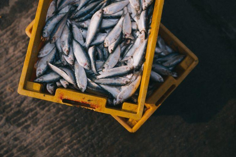 Удачная рыбалка