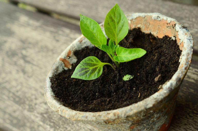 Посадка растения